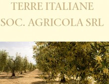 Terre Italiane _ Catologue project